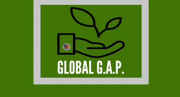 Requirements, development and implementation of a quality management system GLOBAL G.A.P.